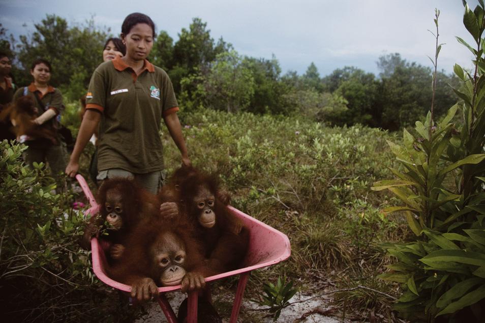 20100517_Orangutan_01