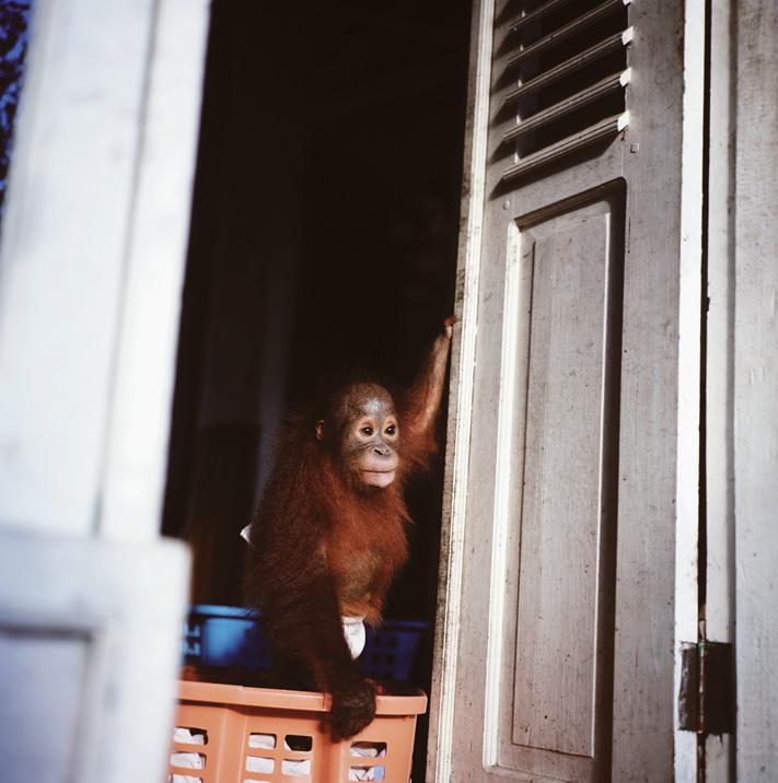 20100517_Orangutan_02