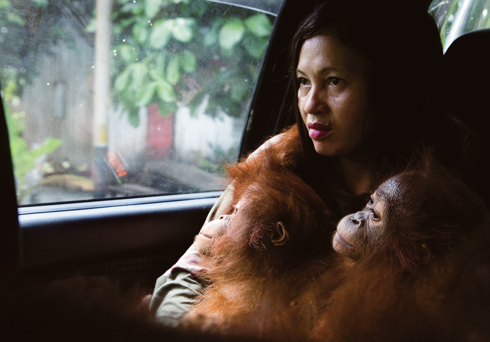 20100517_Orangutan_03