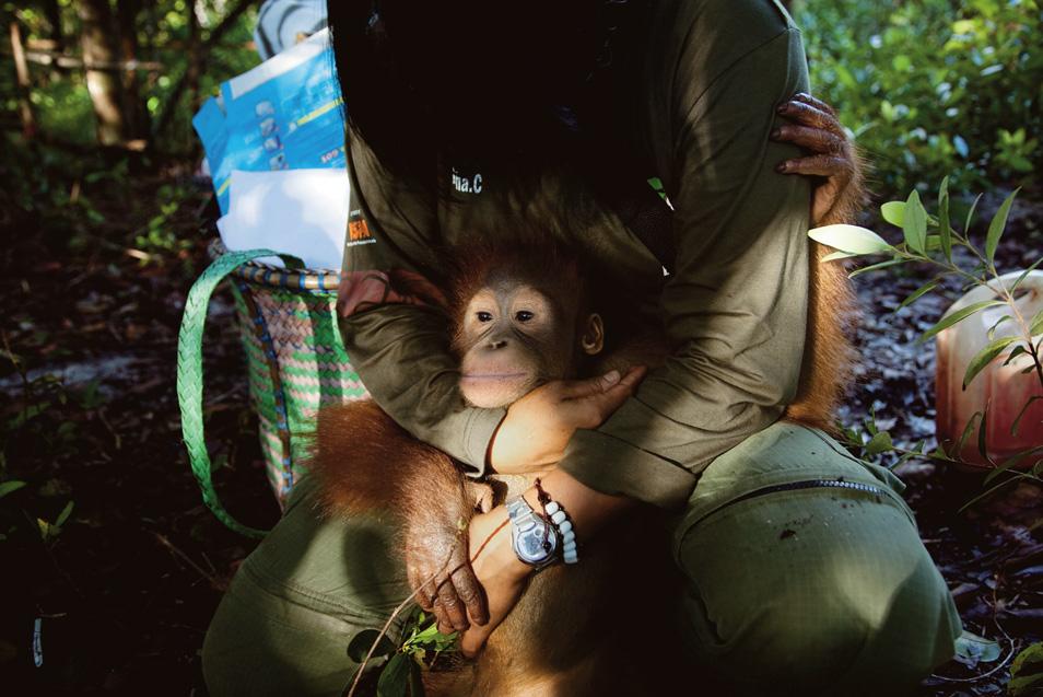 20100517_Orangutan_06