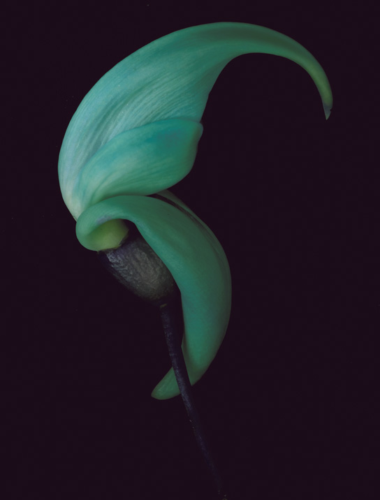"""An image from """"Petal Pushers,"""" a photo essay on flowers."""